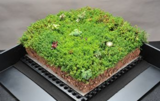 sig dand t blackdown green roofing