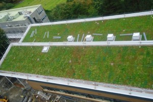 Built Up Extensive Green Roof - Aberystwyth University