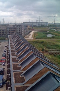 Biodiverse Green Roofs at Barking Riverside - Part of wider Wildlife Management Strategy - SIG Design and Technology