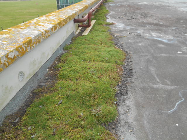 Grass Flat Roof Leaks
