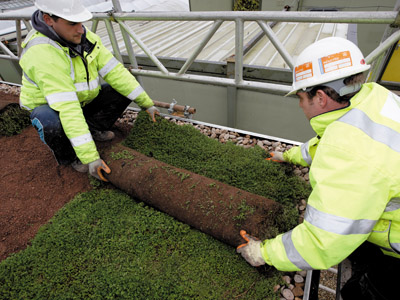 Green Roof Benefits: A Baker's Dozen Reasons to Specify a Green Roof
