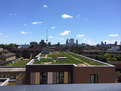 Green roof on a London housing development