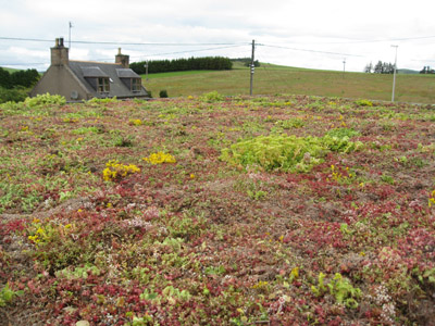 VerdiRoof Green Roof