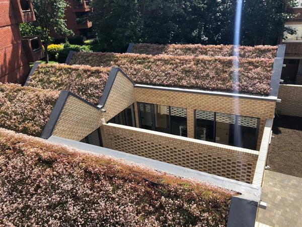 Spencer Courtyard Website Case Study Inset Image 1 v2